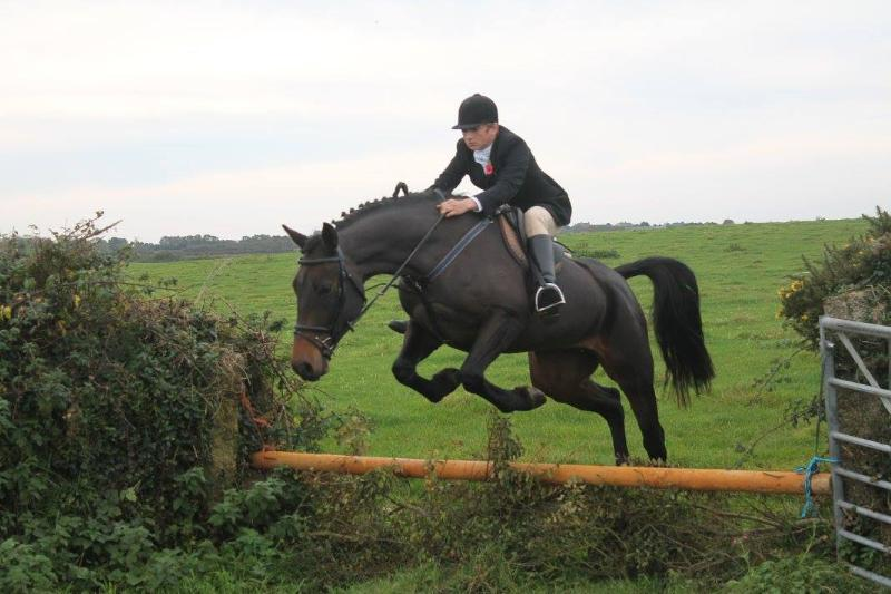 Super Jumper, Hunter, All Rounder 15.3 Gelding (lovely temperament)
