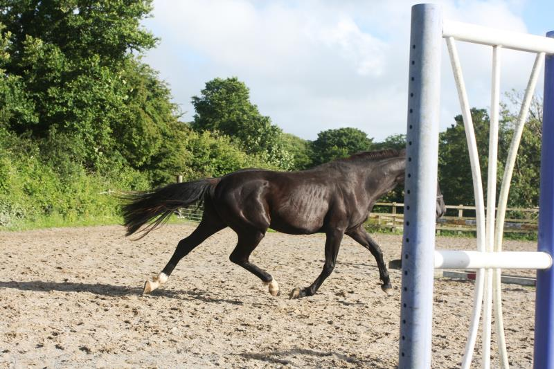INTERNATIONAL EVENTING FAMILY 2YO FILLY